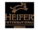 Noticias | HEIFER México